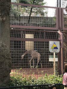 上野動物園20
