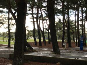 ひたち海浜公園10
