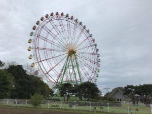 ひたち海浜公園11