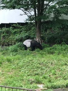 多摩動物公園8