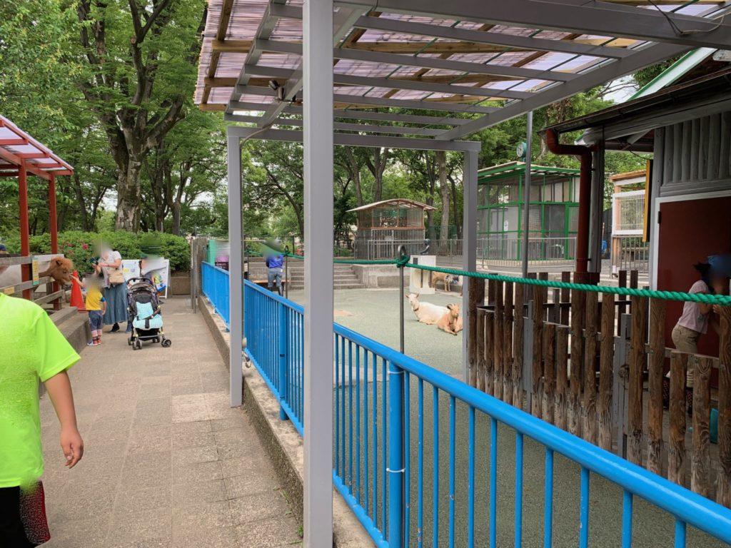 高島平こども動物園4