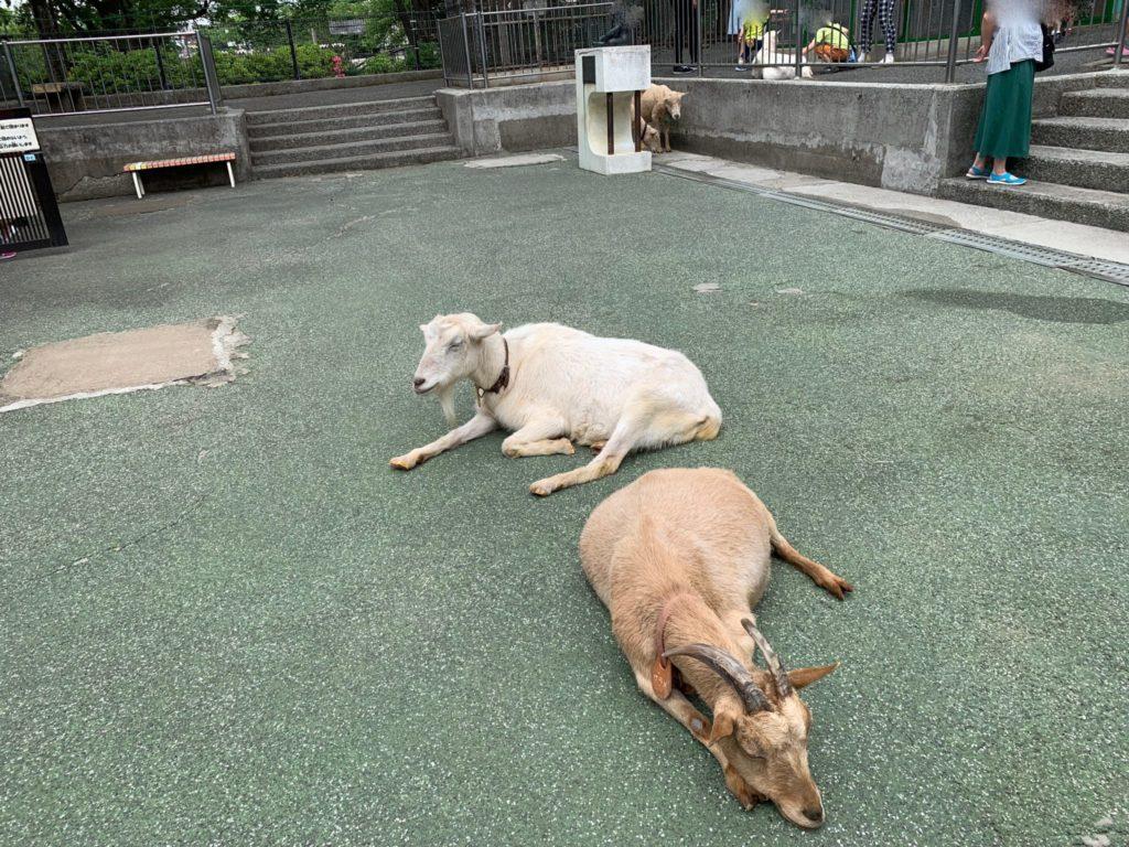 高島平こども動物園5