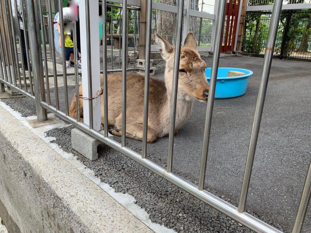 高島平こども動物園6