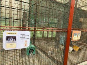 高島平こども動物園8