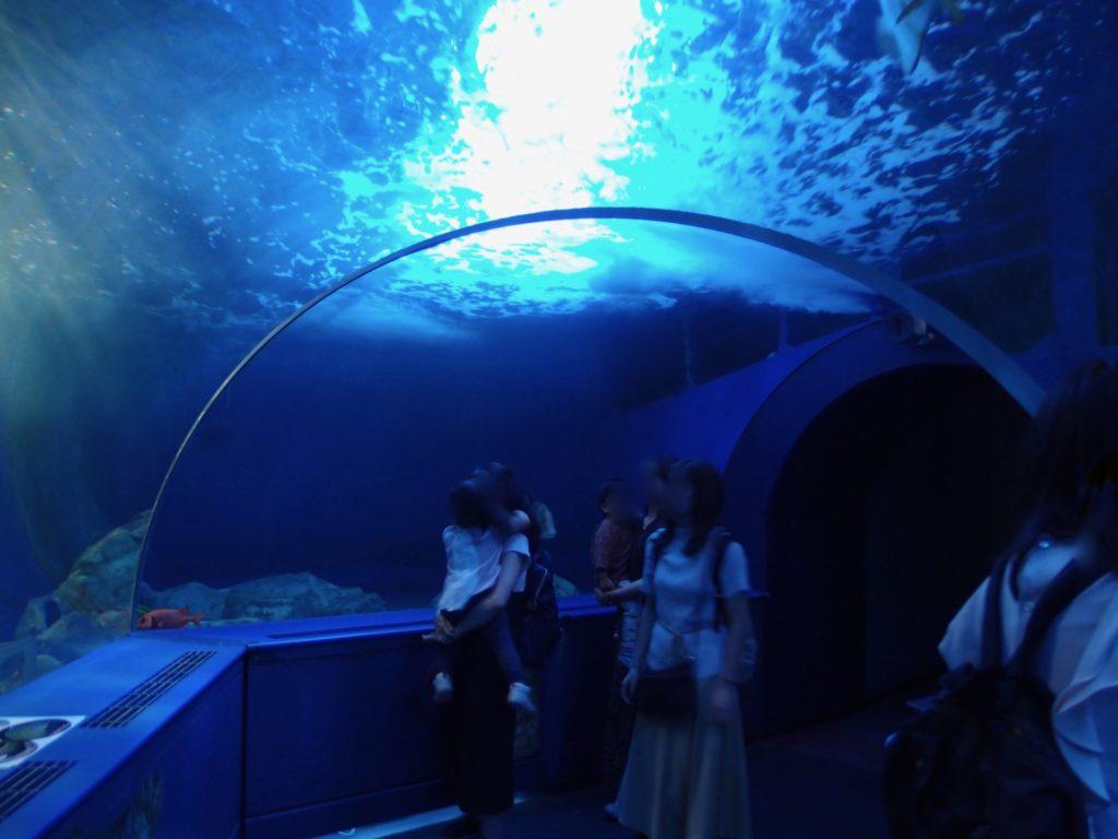 しながわ水族館11