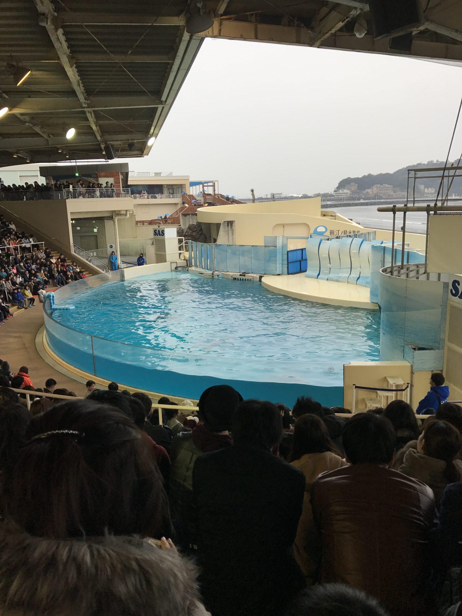 新江ノ島水族館2