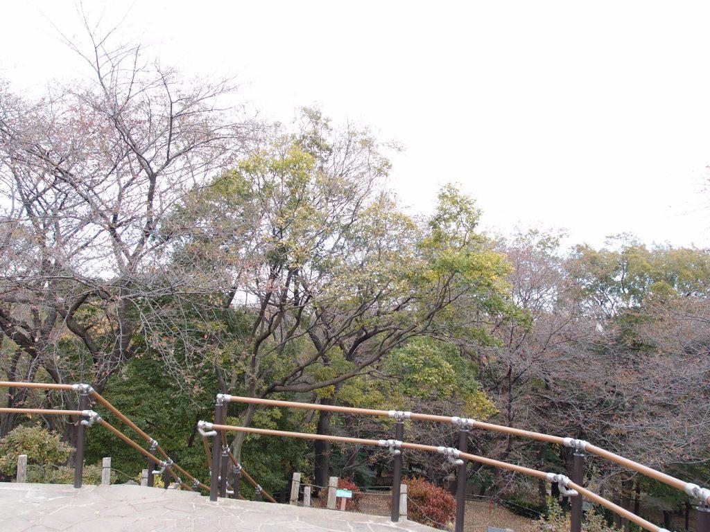戸山公園箱根山9