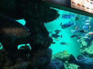葛西臨海水族園11