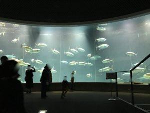 葛西臨海水族園13