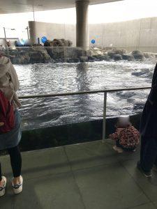 葛西臨海水族園15