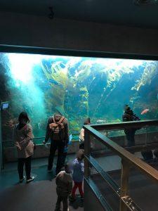 葛西臨海水族園19